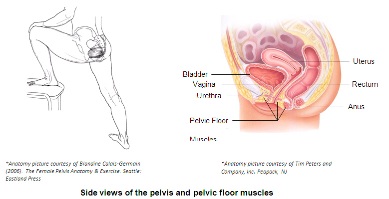 How Can I Feel My Pelvic Floor Muscles?