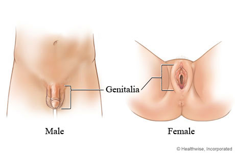 Female genitals after sex