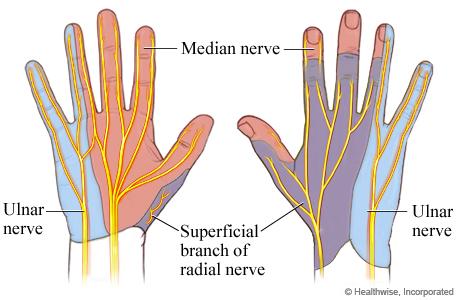 Skin Feeling of the Hand