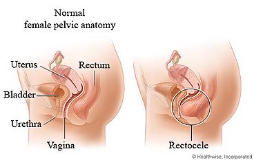 fetus sex organ