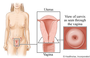 Vagina size change means what