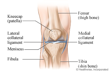 Picture of the anatomy of the knee