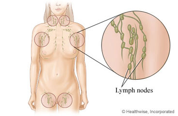 Lymph nodes throughout the body
