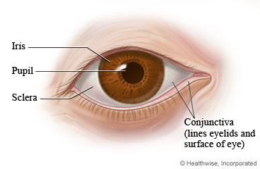 Picture of the parts of the eye