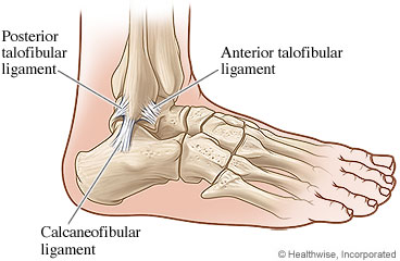 Picture of ankle ligaments