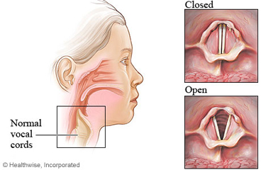 Normal vocal cords, closed and open