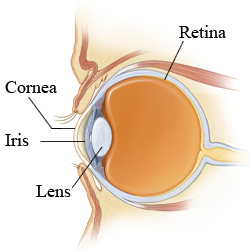 Picture of the anatomy of the eye