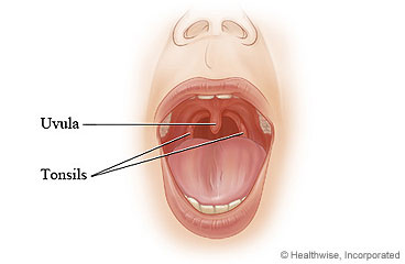 Tonsils and uvula